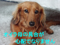 Tora126015