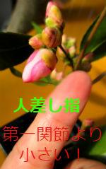 Img_1453_2