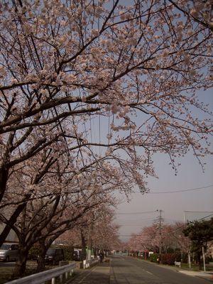 Csakawa_1
