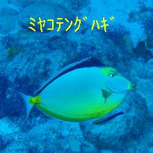 P1130465